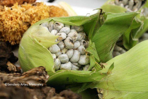 Hongos de recolección y cultivados comestibles.