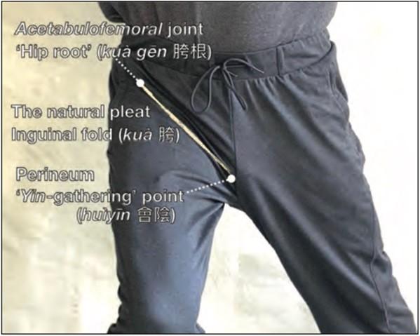 Fig 2. Pliegue de la cadera o kua. Imagen cortesía.